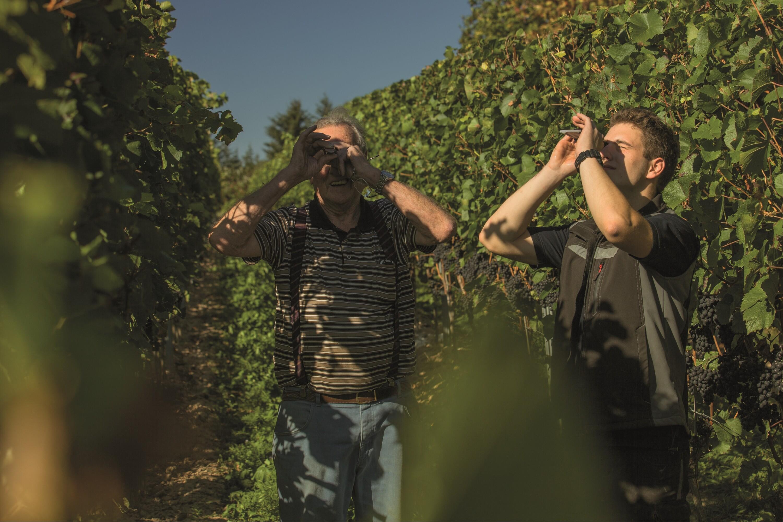 Weingut Bastianshauser Hof - Weinberg
